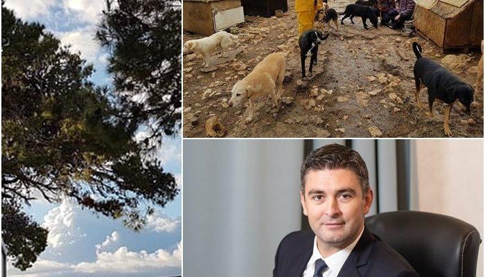 Facebook: Društvo za zaštitu životinja Dubrovnik / Facebook: Mato Franković