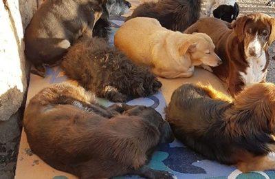 Facebook: Društvo za zaštitu životinja Dubrovnik